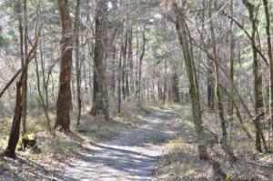 Hiking Path at Hinson Recreation Area along the Chipola River Greenway