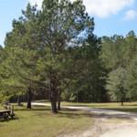 Hinson Recreation Area entry road