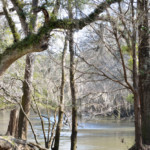 View of the Chipola River along a hiking trail at Hinson Recreation Area