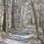 Hiking Path at Hinson Recreation Area along the Chipola River Greenway