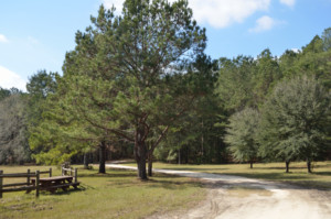 Hinson Recreation Area entry road