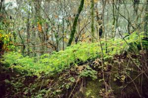 Fern-covered Ridge