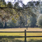 Open field at Hinson Recreation Area along the Chipola River Greenway