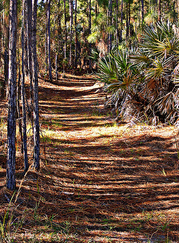 Hiking Trail in the Pines